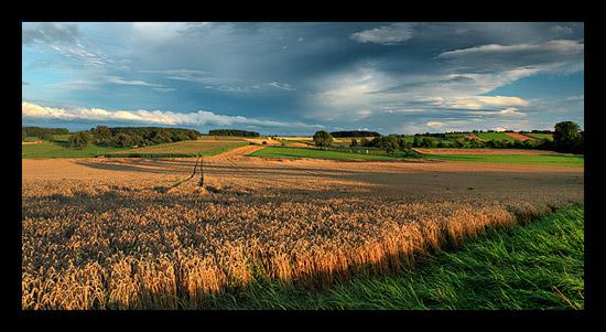 Bientôt la moisson - Alsace ©Sébastien Brière