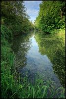 Forêt de la Robertsau à Strasbourg©Sébastien Brière