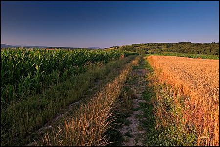 Champs de blé et de maïs, Alsace©Sébastien Brière